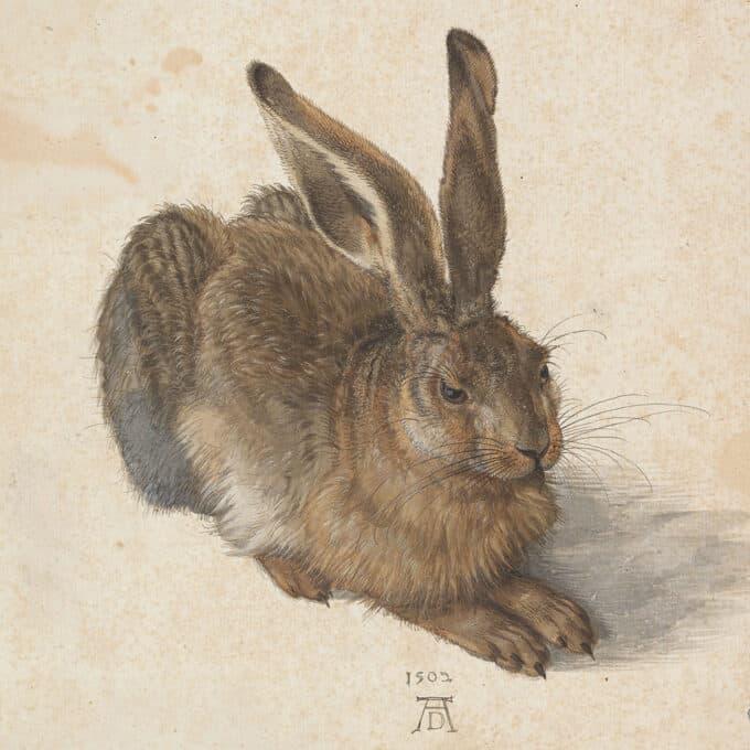 خرگوش-صحرایی---آلبرشت-دورر