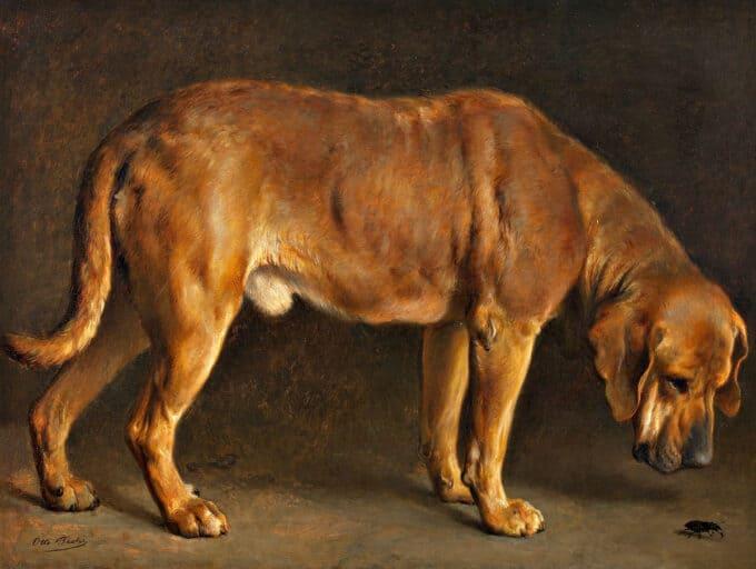 سگ-برهولمر-در-حال-تماشای-یک-سوسک---اوتو-باگه